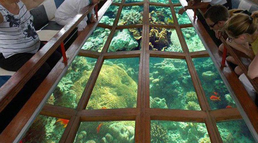 glass-bottom-boat-ride