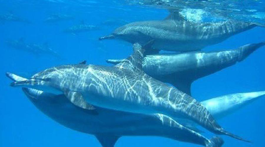 dolphin-house-reef-sha