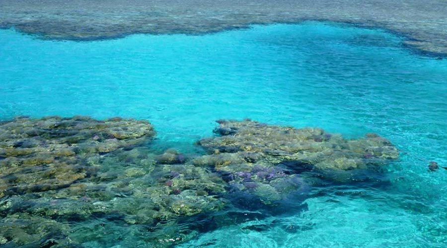 snorkeling-at-satayh-dolphin-reef-2
